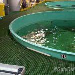 Aquarium Before Safety Net Installation
