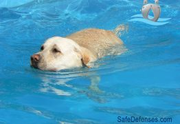 Animal Pool Safety